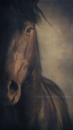 #horse #wolfshadowphotography