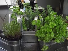 Best herbs to grow indoors for a garden windowsill from The Old Farmer's Almanac.