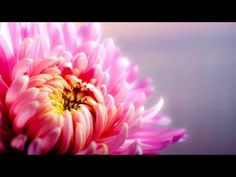 Abraham Hicks ~ How To Prepare For Your Manifestations NEW