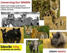 Cover Story :  Conserving Our Wildlife : Court rulings could result in happier future for endangered species of animals and birds. #Urban #Vaastu