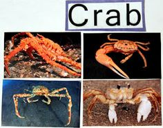 Crab crafts, DIY preschool for an ocean theme - free printables and resources.