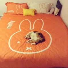 Miffy duvet! OMG I NEED TO HAVE THIS IN MY LIFE.