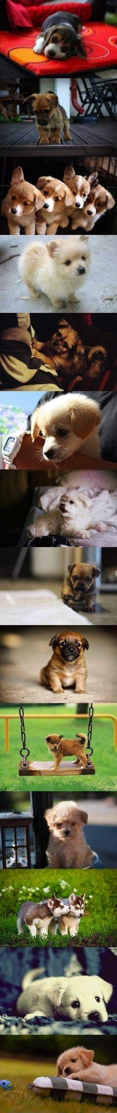 Adorable puppies!!