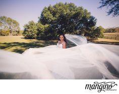 Weddings - Mangino P