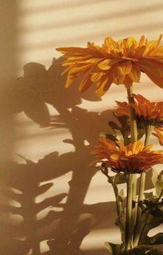 Yellow Aesthetic Pastel, Rainbow Aesthetic, Orange Aesthetic, Aesthetic Pastel Wallpaper, Aesthetic Colors, Flower Aesthetic, Aesthetic Backgrounds, Aesthetic Vintage, Aesthetic Wallpapers