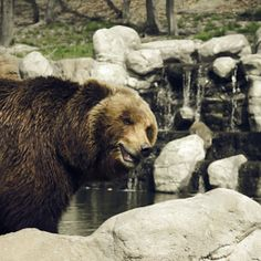 Trang Hoang is using the world's most passionate photo sharing community. Photography Portfolio, Brown Bear, Profile, Animals, User Profile, Animales, Animaux, Animal, Animais