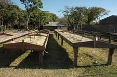 Coffee drying in Matagalpa, Nicaragua