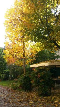 Garden in autumn!!!