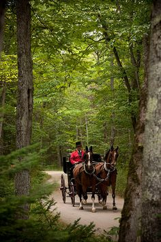 A definite romantic must - Carriage ride through the woods by Grand Hotel on Mackinac Island