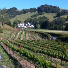 George's vineyards...yep...gonna see this..and bring home a bottle or two..!