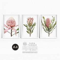 NOW EXPRESS DELIVERY INCLUDED IN PRICE! PRINT COLLECTION - PROTEA, BANKSIA and WARATAH. A4 size - 29.7cm x 21 cm (each print) This collection of original digital drawings, are set on a white background. Please message me if youd prefer the BLACK background option, if no message is received I A4 Size, Black Backgrounds, Delivery, The Originals, Digital, Drawings, Frame, Floral, Holiday