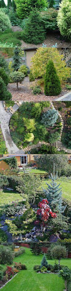 Хвойные растения для сада: правила построения композиций. | ДАЧА,ОГОРОД | Постила