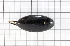 Predaceous Diving Beetle, Order Coleoptera: Family Dytiscidae (Top View) J. Cauthorn