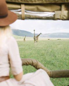 Safari.