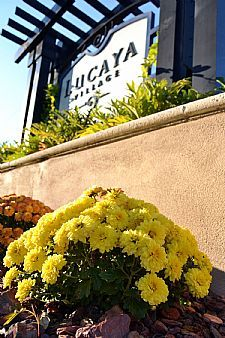 Lucaya Village Resort -  #orlando #Kissimmee #casasemmiami #apartamentosemmiami