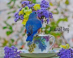 Billy Bluebird in Luana's Garden Cafe by EyesOfLuana on Etsy