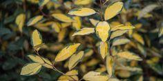 Green Flowers, White Flowers, Planting Shrubs, Deciduous Trees, Types Of Soil, Evergreen, Perennials, Plant Leaves, Perennial