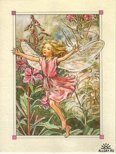 Cicely Mary Barker - Flower Fairies of the Wayside - The Rose-Bay Willow-Herb Fairy Painting Cicely Mary Barker, Kobold, Fairy Pictures, Vintage Fairies, Beautiful Fairies, Flower Fairies, Fantasy Illustration, Fairy Art, Illustrations