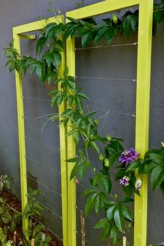 The Ina Wall Trellis by TerraSculpture, growing a passion flower vine.
