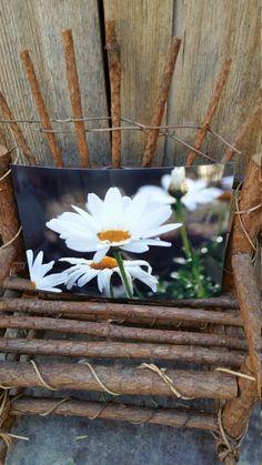 White daisies by DesertsandBeyond on Etsy