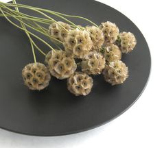 Dried Scabiosa Pods long stem naturally dried by EcoLecticEvents $? Scabiosa Pods, Wedding Flowers, Herbs, Food, Etsy, Image, Meal, Essen, Herb