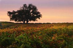 Sonoma County, California - Bob Cornelis/Getty Images