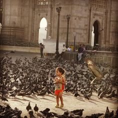 Sparrows enjoying their freedom at Gateway of India, Mumbai