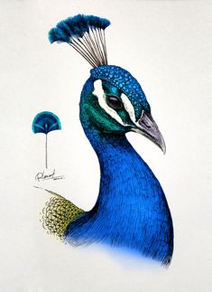 China-based artist RLoN Wang Intricate Animal Illustrations Burst with Color and Life - My Modern Met Pencil Art Drawings, Bird Drawings, Realistic Drawings, Colorful Drawings, Animal Drawings, Animal Illustrations, Pen Illustration, Peacock Drawing, Peacock Wall Art
