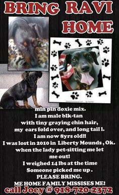 Mounds, OK - someone was known to have picked up Ravi when he got loose.....and never returned him. Min pin/doxie mix https://www.facebook.com/pages/Bringing-Home-Ravi/374827002603381