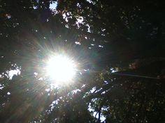 Light seeping through tree.