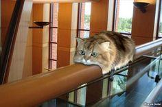 猫おもしろ画像 44