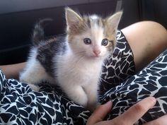 so cutee :]
