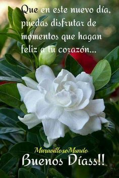 Good Day Quotes: Buenos dias - Quotes Sayings Good Morning In Spanish, Good Morning Good Night, Morning Wish, Good Day Quotes, Good Morning Quotes, Quote Of The Day, Good Night Messages, Morning Messages, Portuguese Quotes