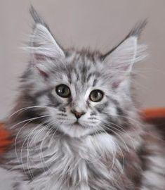 Silver cutie on duty ;)