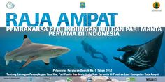 Sharks and manta rays will now benefit from stronger protections after the 2010 decree designating the Raja Ampat Shark and Ray Sanctuary became provincial law!