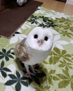Baby Owls, Cute Baby Animals, Animals And Pets, Wild Animals Pictures, Owl Pictures, Cute Creatures, Beautiful Creatures, Owl Pet, Beautiful Owl