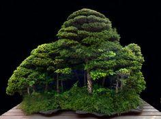 Saikei: a whole little forest!