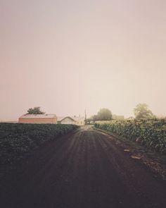 Farm road between crop fields