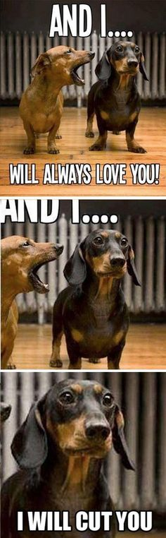 Singing Dachshund: ''And I...will always LOVE YOU!... And I...'' ; Steaming Dachshund: ''I will CUT YOU.'' (edit) source: http://xmtrem.com/top-35-funny-animals-photos-and-memes/