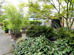 danger garden: Bamboo for Privacy, a Follow-up