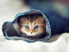 Kitty in jeans