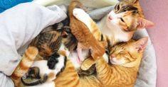 Este padre gato apoya a mamá gata mientras da a luz. Las tiernas fotografías de la familia gatuna y sus cachorros recién nacidos son lo más tierno que verás hoy