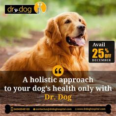Dr Dog Hospital is only 24 Hr & No 1 Pet multipolarity hospital in Hyderabad aims to offer smiles by providing the best treatment to all breeds of pet Dogs, Cats. Over 7 years, we assessed needs and always provided high-quality veterinary services (surgeries, consulting, medicines, pet diet & care both in-patient & Home visit. Our team of expert Veterinary doctors always round the clock to shower all the love and care to your loved one need. We are proud to be No 1 Pet Hospital. Veterinary Surgeon, Veterinary Services, Dental Services, Small Animal Hospital, Pet Hospital, Dog Health Tips, Pet Clinic, Love Your Pet