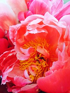 Spring time Peonies photo by Donanne Kasikci 2014