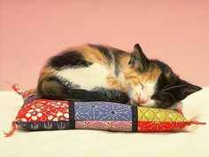 calico kitten asleep on colorful patchwork cushion