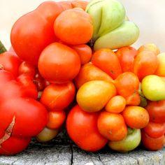 Finland growing tomatoes vegetable - Поиск в Google