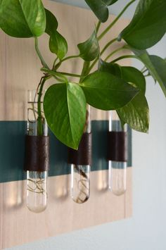 Test tube wall mounted vase DIY project /// Unique House Plant Display Ideas by Design Fixation Test Tube Crafts, Test Tube Holder, Wall Mounted Vase, Traditional Vases, Wood Vase, House Plants Decor, Cactus Y Suculentas, Diy Wall, Glass Vase