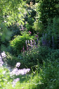 beautiful lavender shade garden.