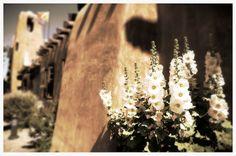 Hollyhocks Flowers Art Museum Santa Fe New Mexico Adobe Architecture