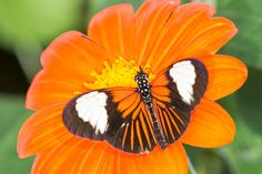 Stratford-Upon-Avon Butterfly Farm : A wonderful world of an exotic rainforest with hundreds of the world's most spectacular and colourful butterflies flying all around